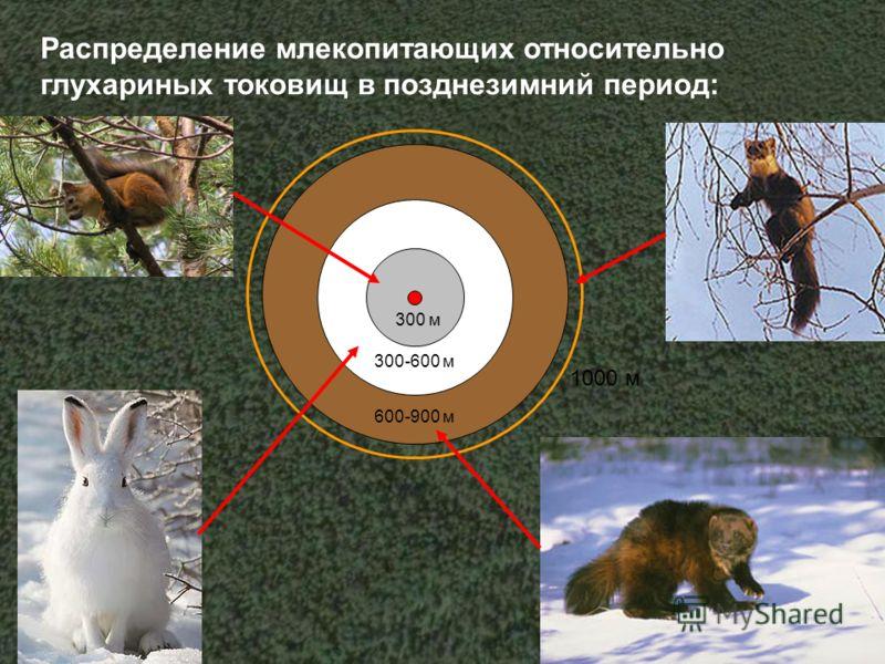 Распределение млекопитающих относительно глухариных токовищ в позднезимний период: 300 м 300-600 м 600-900 м 1000 м