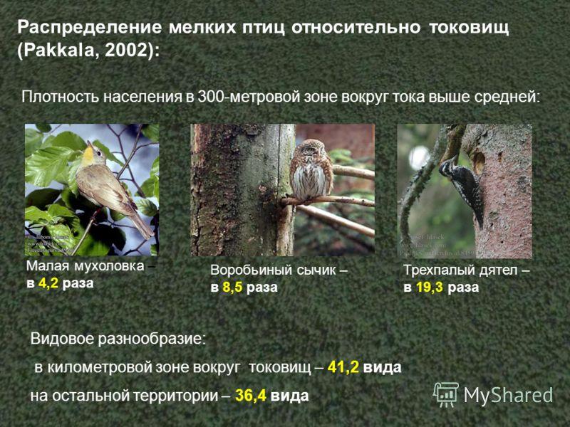 Распределение мелких птиц относительно токовищ (Pakkala, 2002): Плотность населения в 300-метровой зоне вокруг тока выше средней: Малая мухоловка – в 4,2 раза Воробьиный сычик – в 8,5 раза Трехпалый дятел – в 19,3 раза Видовое разнообразие: в километ