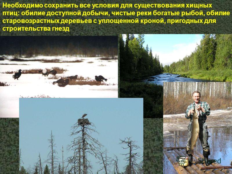Необходимо сохранить все условия для существования хищных птиц: обилие доступной добычи, чистые реки богатые рыбой, обилие старовозрастных деревьев с уплощенной кроной, пригодных для строительства гнезд