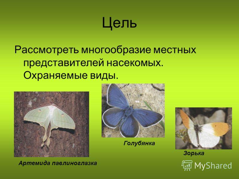Цель Рассмотреть многообразие местных представителей насекомых. Охраняемые виды. Зорька Голубянка Артемида павлиноглазка