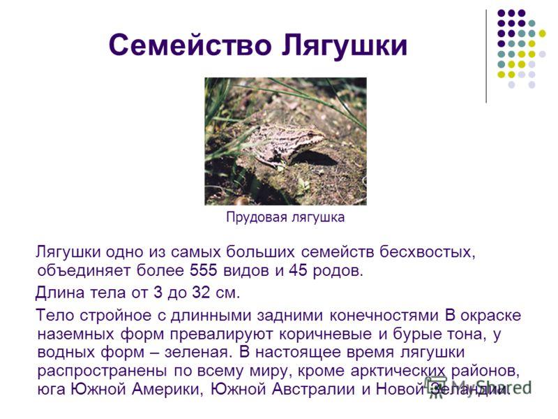 Семейство Лягушки Лягушки одно из самых больших семейств бесхвостых, объединяет более 555 видов и 45 родов. Длина тела от 3 до 32 см. Тело стройное с длинными задними конечностями В окраске наземных форм превалируют коричневые и бурые тона, у водных