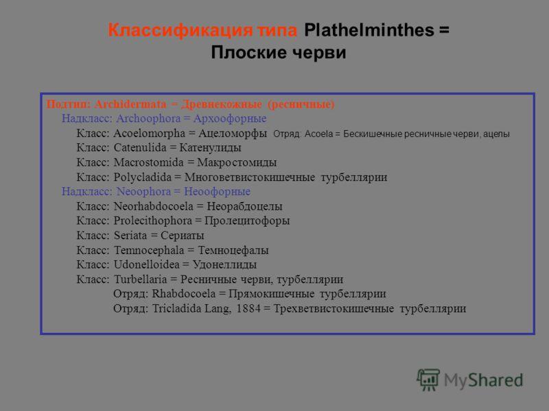 Подтип: Archidermata = Древнекожные (ресничные) Надкласс: Archoophora = Архоoфорные Класс: Acoelomorpha = Ацеломорфы Отряд: Acoela = Бескишечные ресничные черви, ацелы Класс: Catenulida = Катенулиды Класс: Macrostomida = Макростомиды Класс: Polycladi