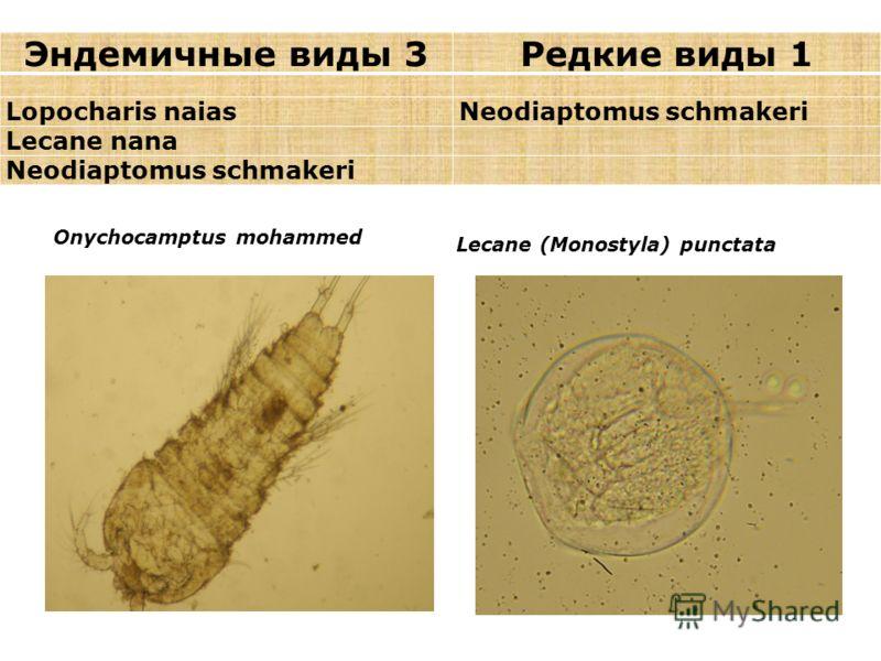 Эндемичные виды 3Редкие виды 1 Lopocharis naiasNeodiaptomus schmakeri Lecane nana Neodiaptomus schmakeri Onychocamptus mohammed Lecane (Monostyla) punctata