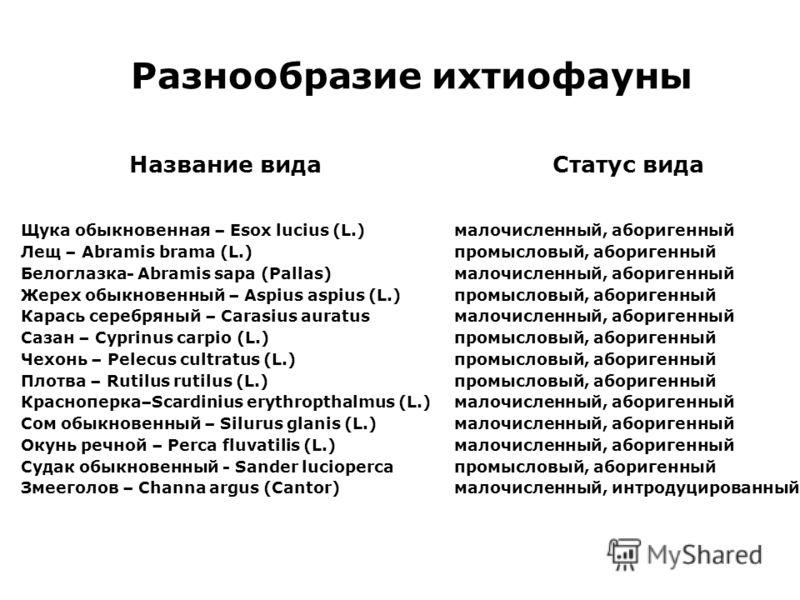 Разнообразие ихтиофауны Название вида Статус вида Щука обыкновенная – Esox lucius (L.) малочисленный, аборигенный Лещ – Abramis brama (L.) промысловый, аборигенный Белоглазка- Abramis sapa (Pallas) малочисленный, аборигенный Жерех обыкновенный – Aspi