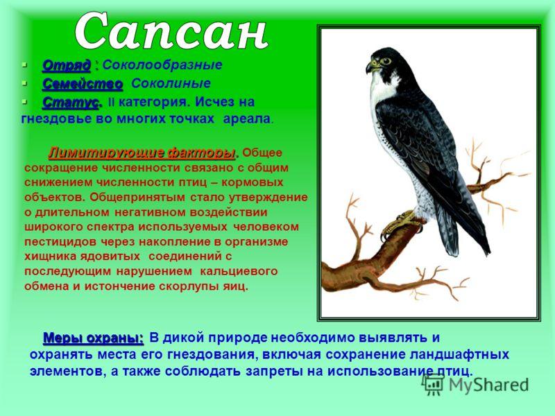 Отряд : Отряд : Соколообразные Семейство Семейство Соколиные Статус. Статус. II категория. Исчез на гнездовье во многих точках ареала. Лимитирующие факторы. Лимитирующие факторы. Общее сокращение численности связано с общим снижением численности птиц
