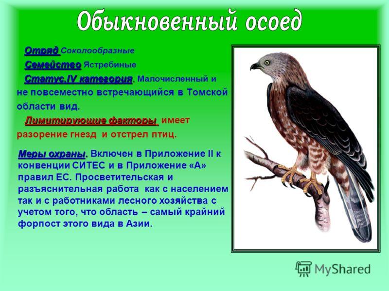 Отряд Отряд Соколообразные Семейство Семейство Ястребиные Статус.IV категория. Статус.IV категория. Малочисленный и не повсеместно встречающийся в Томской области вид. Лимитирующие факторы Лимитирующие факторы имеет разорение гнезд и отстрел птиц. Ме