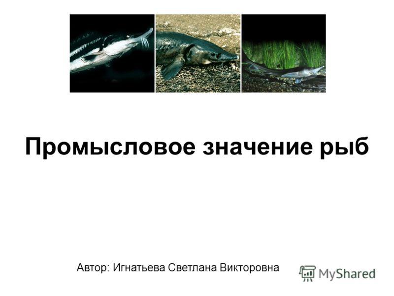 Промысловое значение рыб Автор: Игнатьева Светлана Викторовна