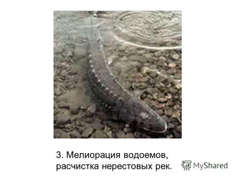 3. Мелиорация водоемов, расчистка нерестовых рек.