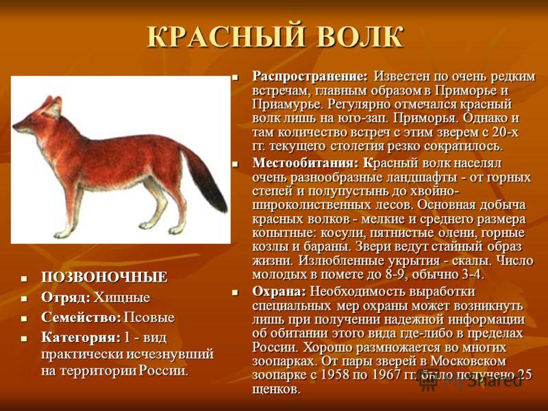 Животные в красной книге с рисунками