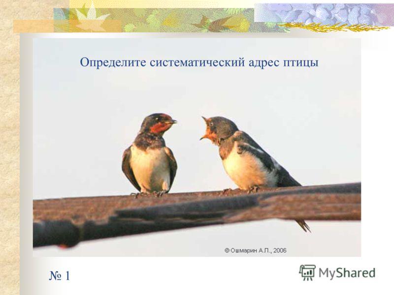 1 Определите систематический адрес птицы