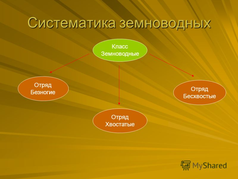 Систематика земноводных Класс Земноводные Отряд Безногие Отряд Хвостатые Отряд Бесхвостые