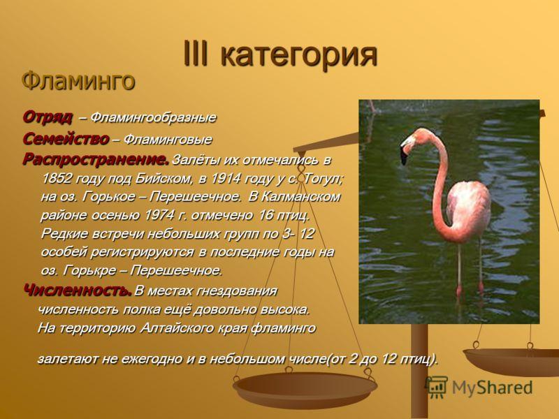 III категория Фламинго Отряд – Фламингообразные Семейство – Фламинговые Распространение. Залёты их отмечались в 1852 году под Бийском, в 1914 году у с. Тогул; 1852 году под Бийском, в 1914 году у с. Тогул; на оз. Горькое – Перешеечное. В Калманском н