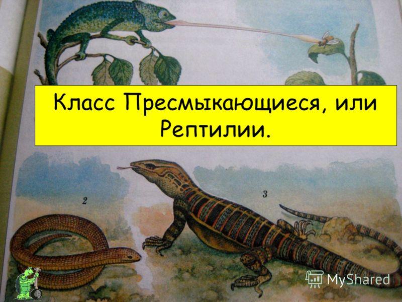Класс Пресмыкающиеся, или Рептилии.