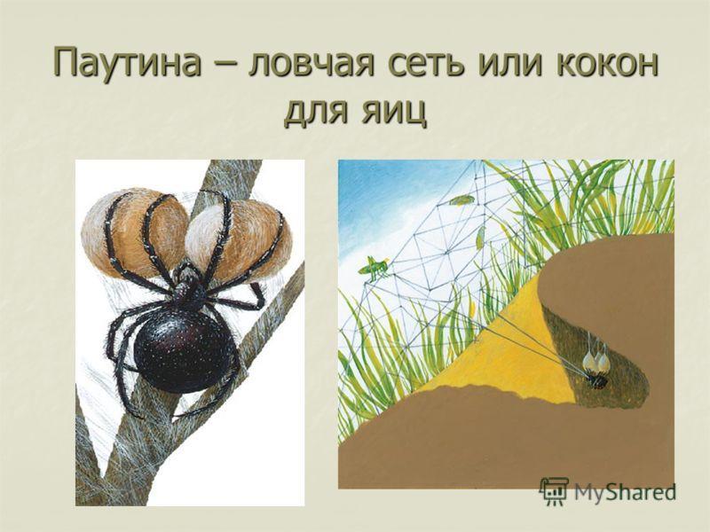 Паутина – ловчая сеть или кокон для яиц