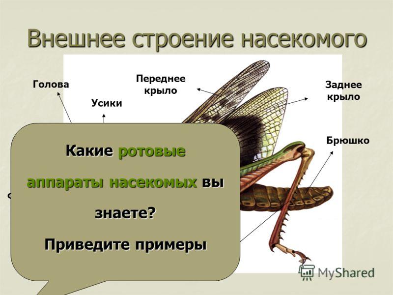 Внешнее строение насекомого Ноги Суставы Фасеточные глаза Простые глазки Усики Грудь Голова Переднее крыло Заднее крыло Брюшко Ротовой аппарат Какие ротовые аппараты насекомых вы знаете? Приведите примеры