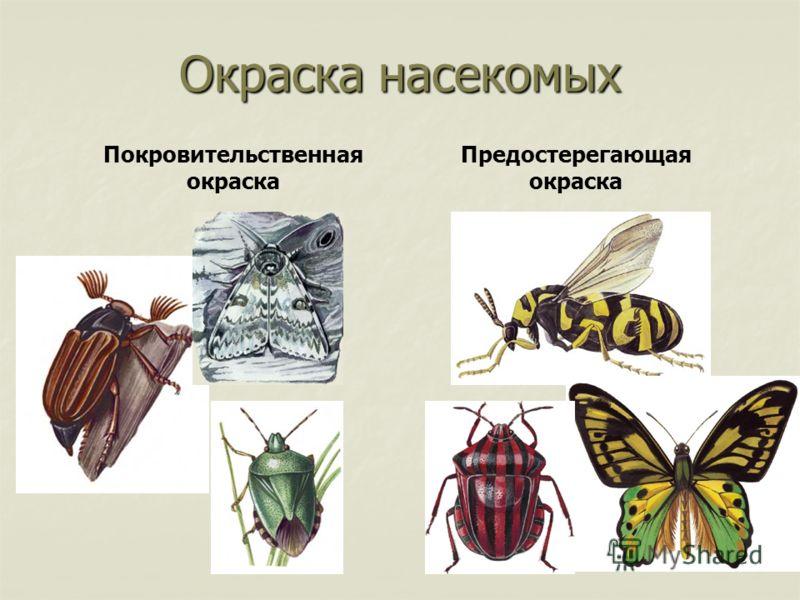 Окраска насекомых Покровительственная окраска Предостерегающая окраска