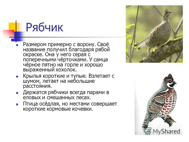 Рябчик Размером примерно с ворону. Своё название получил благодаря рябой окраске. Она у него серая с поперечными чёрточками. У самца чёрное пятно на горле и хорошо выраженный хохолок. Крылья короткие и тупые. Взлетает с шумом, летает на небольшие рас