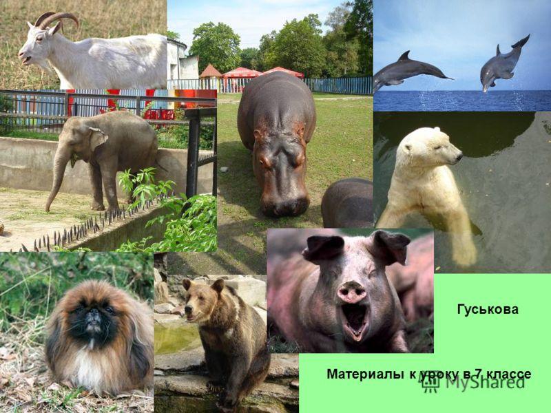 Гуськова Материалы к уроку в 7 классе