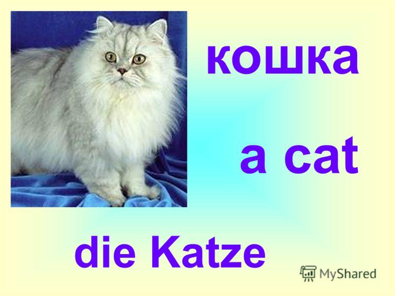 a cat кошка die Katze