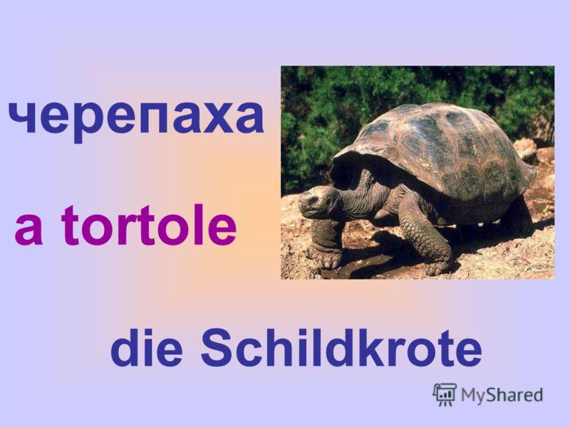 черепаха die Schildkrote a tortole