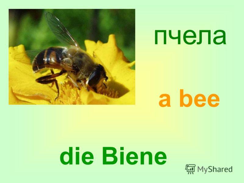 пчела die Biene a bee
