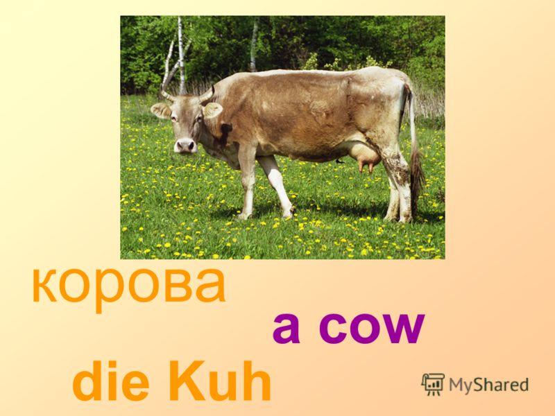 корова die Kuh a cow