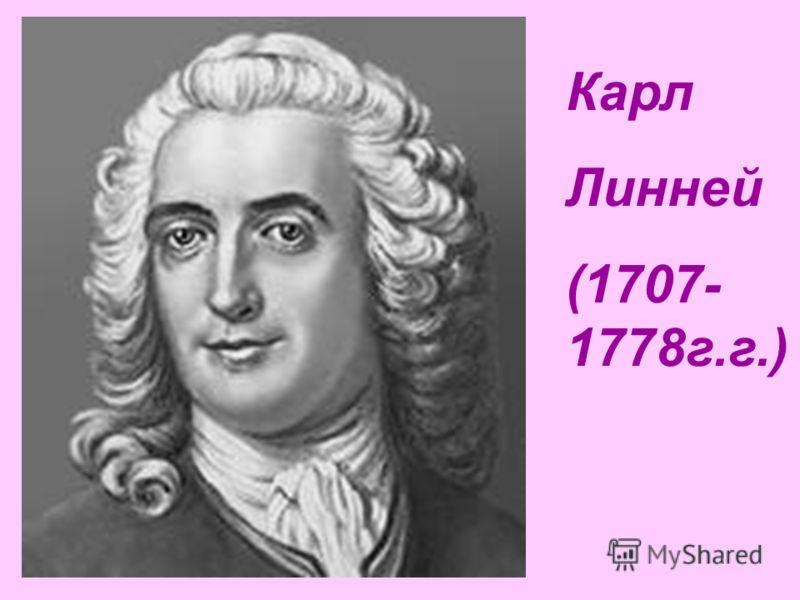 Карл Линней (1707- 1778г.г.)