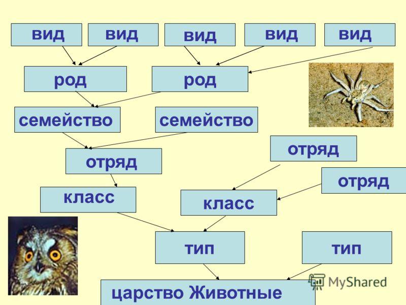 вид тип царство Животные вид род отряд класс семейство отряд класс отряд вид род