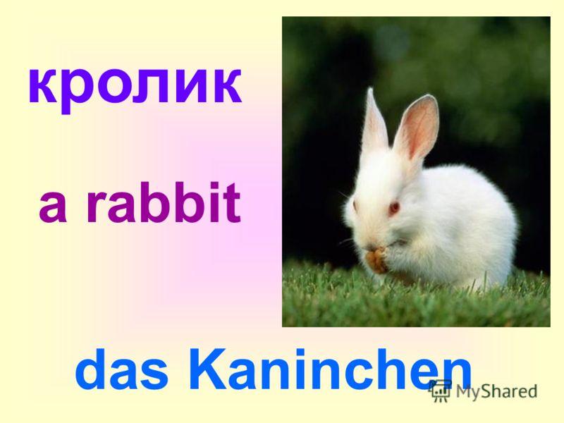 кролик das Kaninchen a rabbit