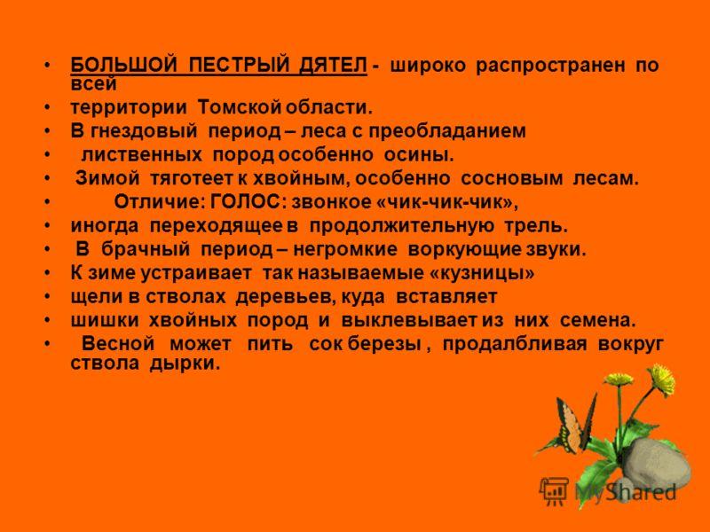 ОТРЯД ДЯТЛООБРАЗНЫЕ - средние и мелкие птицы, ведущие древесный образ жизни. В лесной зоне Западной Сибири проживает пять видов дятлов: ЧЕРНЫЙ ДЯТЕЛ СЕДОЙ ДЯТЕЛ ТРЕХПАЛЫЙ ДЯТЕЛ БЕЛОСПИННЫЙ ДЯТЕЛ