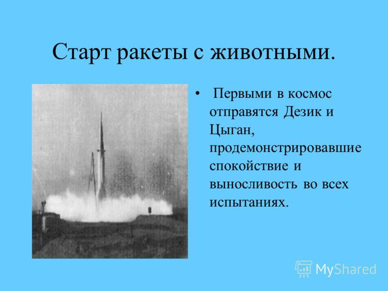 Старт ракеты с животными. Первыми в космос отправятся Дезик и Цыган, продемонстрировавшие спокойствие и выносливость во всех испытаниях.
