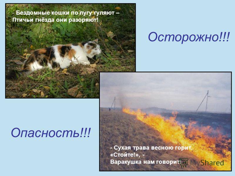Осторожно!!! Опасность!!! - Сухая трава весною горит. «Стойте!», - Варакушка нам говорит! - Бездомные кошки по лугу гуляют – Птичьи гнёзда они разоряют!