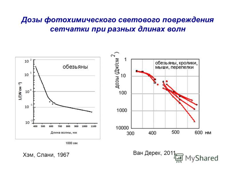 Дозы фотохимического светового повреждения сетчатки при разных длинах волн Хэм, Слани, 1967 Ван Дерек, 2011 обезьяны