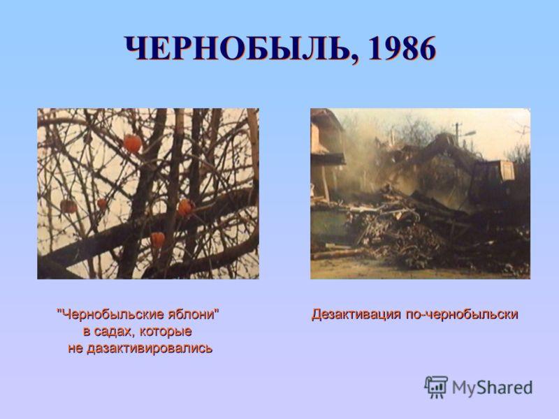 ЧЕРНОБЫЛЬ, 1986 Дезактивация по-чернобыльски Чернобыльские яблони в садах, которые не дазактивировались