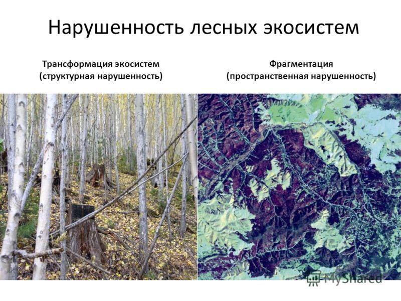 Нарушенность лесных экосистем Трансформация экосистем (структурная нарушенность) Фрагментация (пространственная нарушенность)