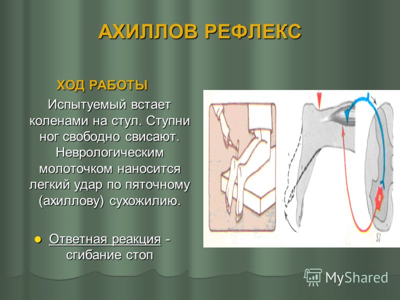 КОЛЕННЫЙ РЕФЛЕКС ХОД РАБОТЫ Испытуемый в положении сидя кладет правую ногу на левую. Экспериментатор наносит легкий удар неврологическим молоточком по сухожилию четырехглавой мышцы правой ноги (эксперимент повторите с левой ногой). Сравните рефлексы