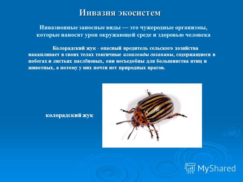 Инвазия экосистем Инвазионные заносные виды это чужеродные организмы, которые наносят урон окружающей среде и здоровью человека Колорадский жук - опасный вредитель сельского хозяйства накапливает в своих телах токсичные алкалоиды соланины, содержащие