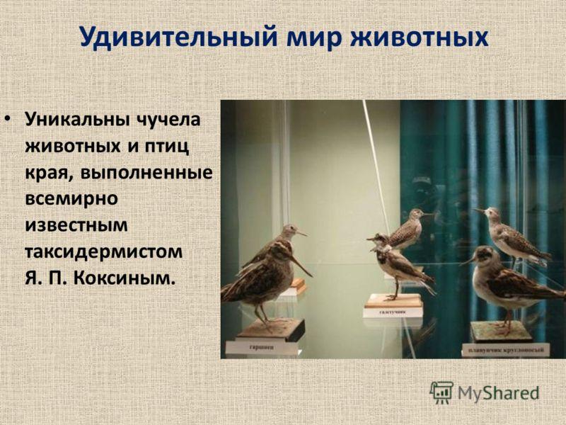 Удивительный мир животных Уникальны чучела животных и птиц края, выполненные всемирно известным таксидермистом Я. П. Коксиным.