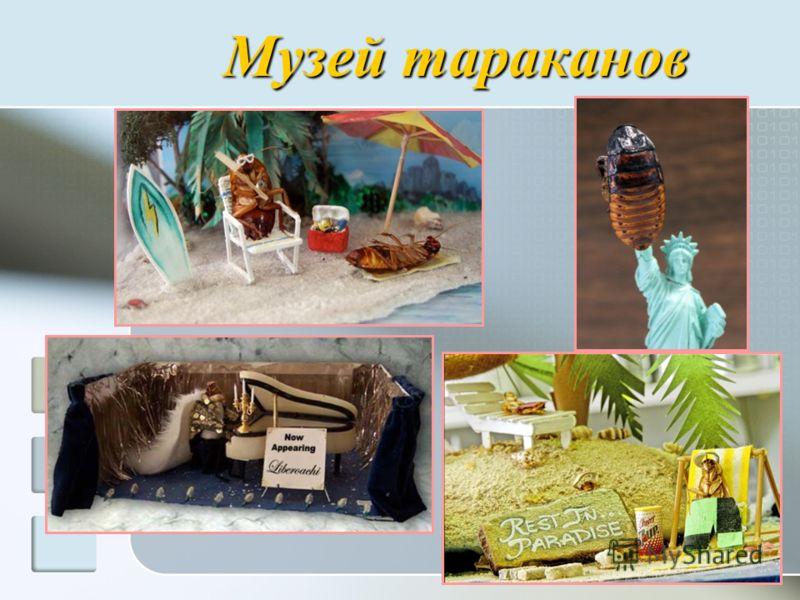 Музей тараканов
