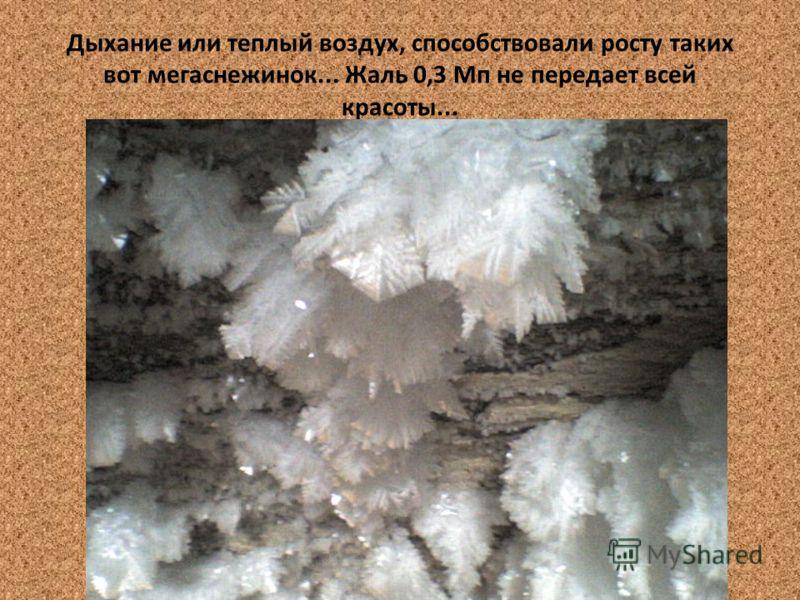 Дыхание или теплый воздух, способствовали росту таких вот мегаснежинок... Жаль 0,3 Мп не передает всей красоты...
