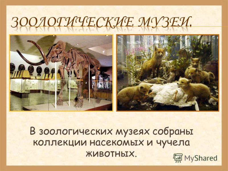 В зоологических музеях собраны коллекции насекомых и чучела животных.