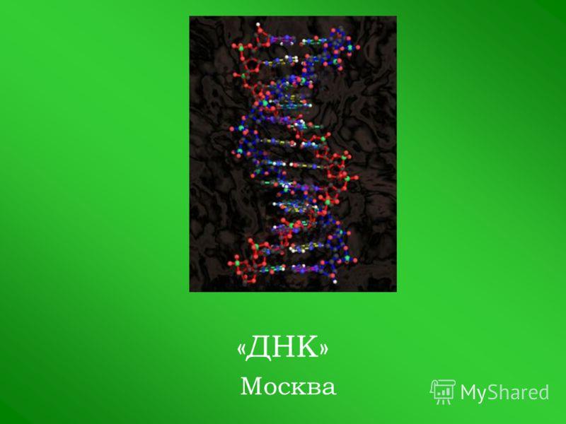 «ДНК» Москва