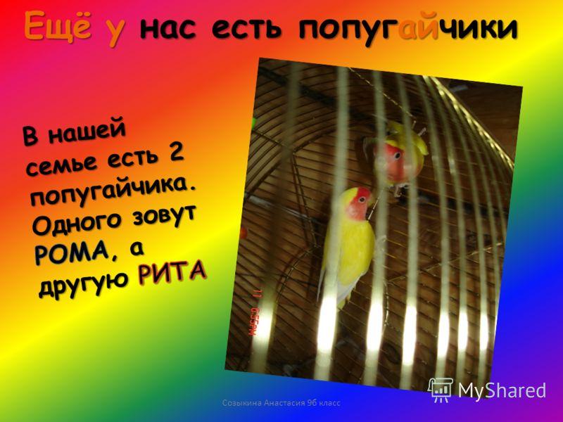 Созыкина Анастасия 9б класс Ещё у нас есть попугайчики
