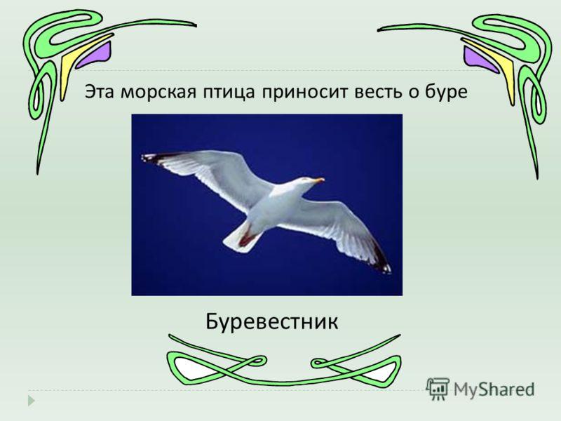 Эта морская птица приносит весть о буре Буревестник