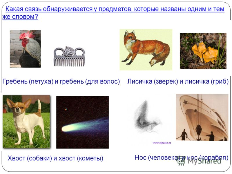 Какая связь обнаруживается у предметов, которые названы одним и тем же словом? Какая связь обнаруживается у предметов, которые названы одним и тем же словом? Гребень (петуха) и гребень (для волос)Лисичка (зверек) и лисичка (гриб) Хвост (собаки) и хво