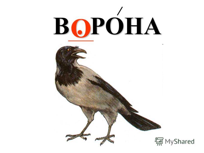 В. РОНА О