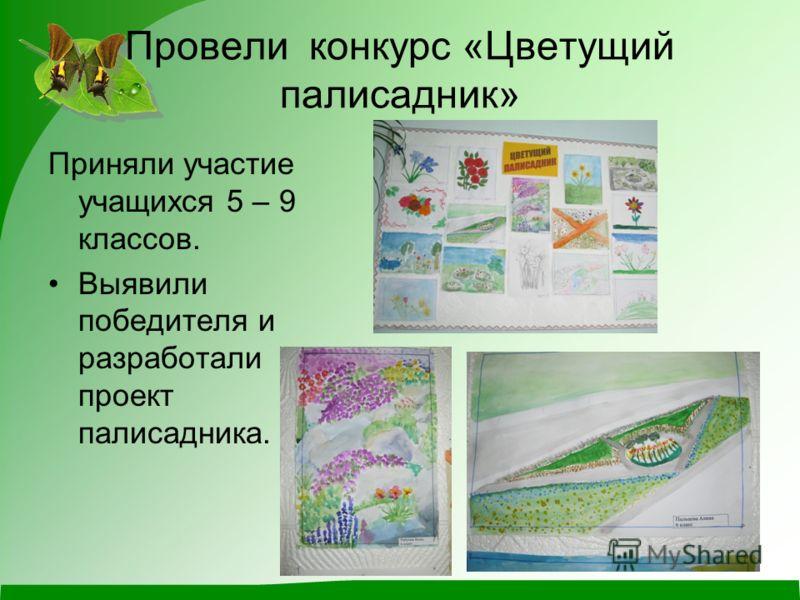 Провели конкурс «Цветущий палисадник» Приняли участие учащихся 5 – 9 классов. Выявили победителя и разработали проект палисадника.