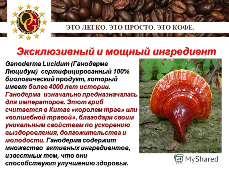 Эксклюзивный и мощный ингредиент Ganoderma Lucidum (Ганодерма Люцидум) сертифицированный 100% биологический продукт, который имеет более 4000 лет истории. Ганодерма изначально предназначалась для императоров. Этот гриб считается в Китае «королем трав