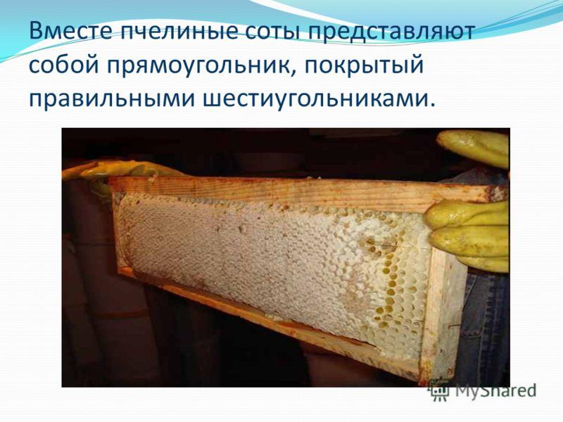 Вместе пчелиные соты представляют собой прямоугольник, покрытый правильными шестиугольниками.