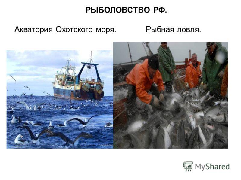 РЫБОЛОВСТВО РФ. Акватория Охотского моря. Рыбная ловля.